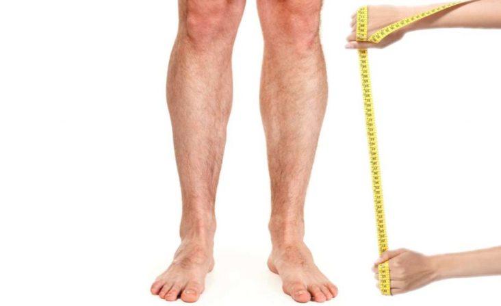 L'allongement des jambes